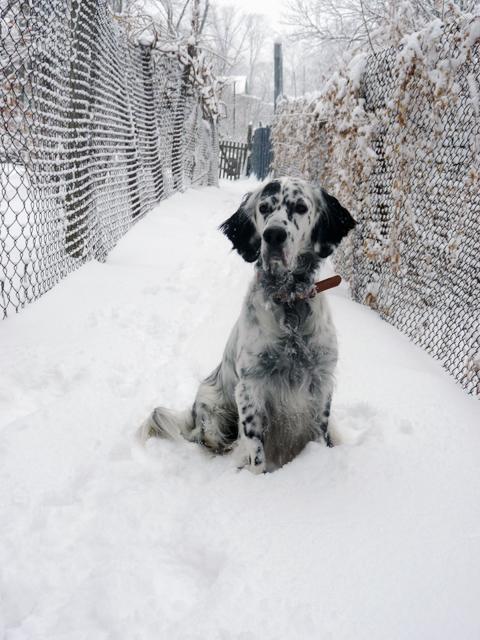 Мой любимый пес! Дарьяна и Рэми - продолжение - Страница 27 12846_P1220651