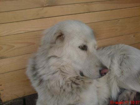 http://www.pictureshack.ru/images/2340DSC02403belka.JPG