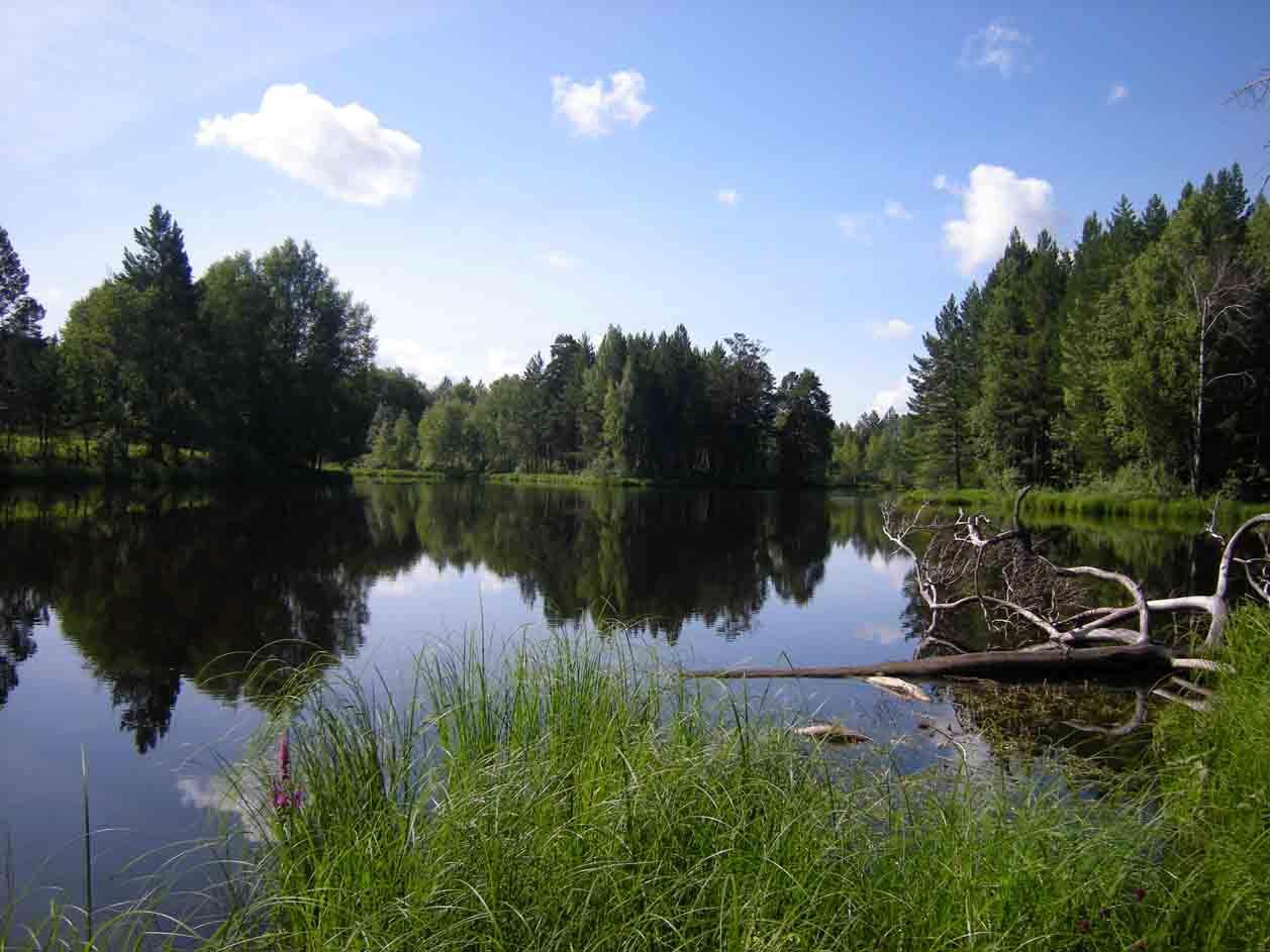Озеро Щучье летом