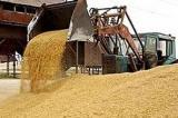 На Рівненщині – рекордний врожай зернових
