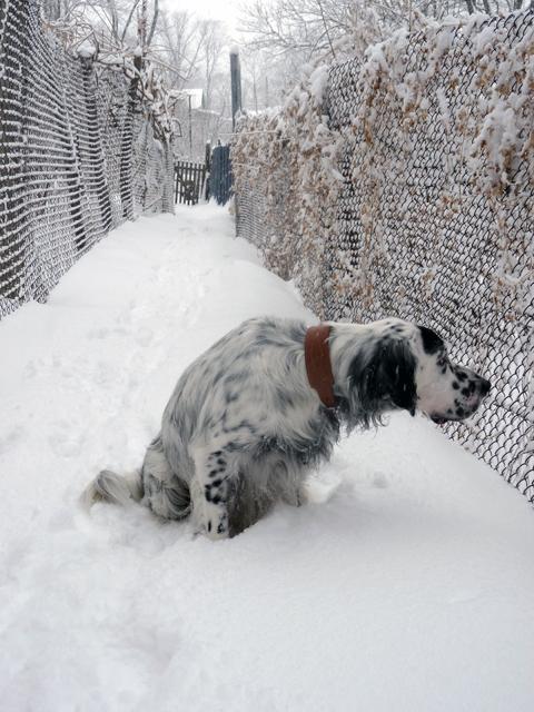 Мой любимый пес! Дарьяна и Рэми - продолжение - Страница 27 53044_P1220649