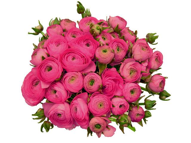 http://www.pictureshack.ru/images/99179_0016.jpg